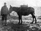 A Miner and His Mule -