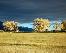 Sunlit Feilds at the Everson Ranch in Fall - John Lorenz