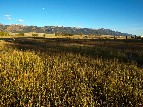 Fields of Everson Ranch under the Moon -