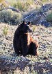 Brown Bear at Valley View, 2011 -