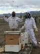 Bee Keepers at the Everson Ranch - Cherrye O'Donal