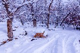 Snow Covered Vehicle Site -