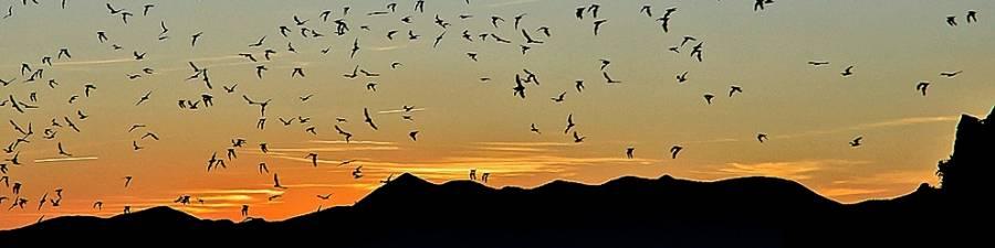 [BANNER Orient Mine Bats at Sunset]
