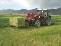 Summer Hay from the Everson Ranch