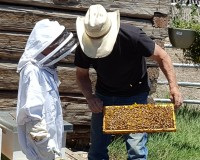 Beehive at the Ranch