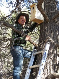 Volunteer hanging owl habitat